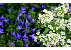 地球,花,花,壁纸,(400)
