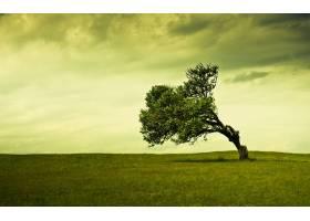 地球,树,树,领域,草,寂寞的,树,壁纸,