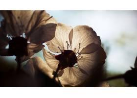 地球,花,花,壁纸,(281)