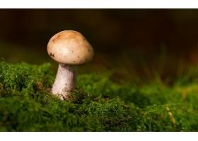 地球,蘑菇,壁纸,(40)