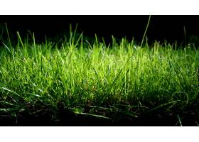 地球,草,壁纸,(40)