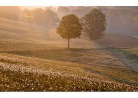 地球,风景,风景优美的,领域,花,树,雾,早晨,日出,森林,壁纸,图片