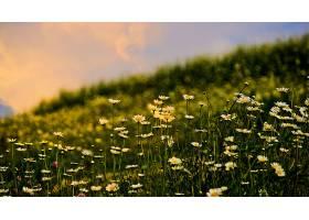 地球,雏菊,花,花,自然,巨,特写镜头,壁纸,