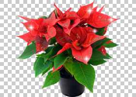 圣诞一品红,花卉,花束,插花,人造花,花卉设计,花盆,喷泉,花园里,