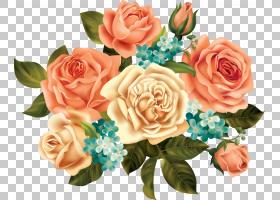 圣诞卡背景,花卉,插花,切花,蔷薇,玫瑰秩序,玫瑰,玫瑰家族,桃子,