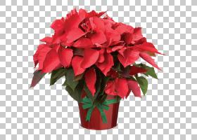 圣诞树背景,海棠,插花,花卉,花卉设计,粉红色家庭,花束,一年生植