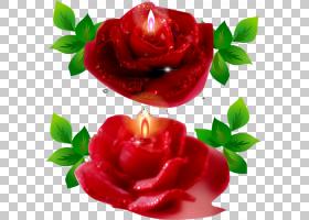 卡通生日蛋糕,红色,情人节,花瓣,玫瑰秩序,玫瑰,玫瑰家族,花,植物