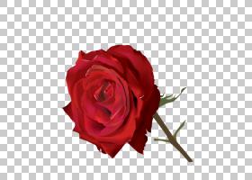 印度花卉背景,情人节,花束,蔷薇,切花,floribunda,花卉,玫瑰秩序,