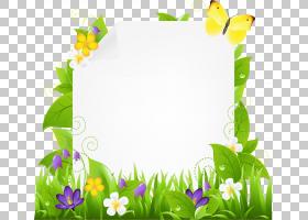 向日葵边境山寨,草,绿色,传粉者,紫罗兰家族,植物群,花卉设计,昆