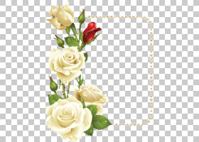 婚礼花卉背景,婚礼仪式用品,插花,人造花,玫瑰秩序,玫瑰家族,植物