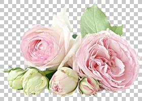 圣诞礼物卡通,花卉,蔷薇,切花,floribunda,插花,花瓣,玫瑰秩序,玫图片