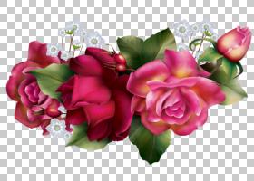 粉红色花卡通,草本植物,花卉,洋红色,插花,蔷薇,玫瑰秩序,玫瑰家