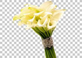 白百合,花卉,植物茎,白色,插花,切花,人造花,花卉设计,黄色,花瓶,