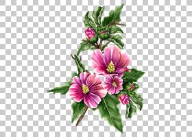 花卉背景,梅洛家族,马尔瓦,花卉,插花,植物,酸奶,草莓,帽子,洋红图片