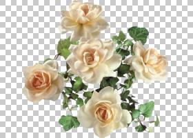婚礼花束,婚礼仪式用品,花卉,白色,蔷薇,切花,floribunda,栀子,插