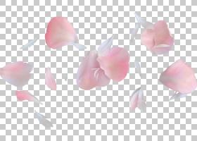 粉红色花卉背景,切花,粉红色,手工艺,花卉设计,礼物,情人节,花束,图片