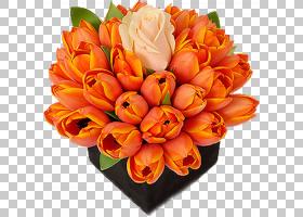 百合花卡通,花卉,橙色,切花,百合家族,花卉设计,插花,花瓣,桃子,图片