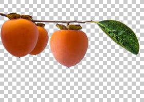 树木卡通,果树,水果,柿子,乌木和柿子,苹果,本地食物,超级食品,天