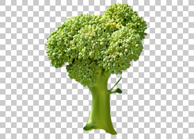 绿草背景,草,树,花盆,灌木,花,植物,绿色,豆科,健康,叶菜,食物,蔬