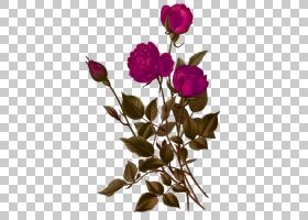 粉红色花卡通,花卉设计,花束,洋红色,蔷薇,花瓣,分支,切花,植物群