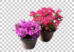 粉红色花卡通,草本植物,一年生植物,紫罗兰,粉红色家庭,洋红色,人