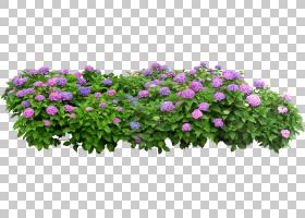 花盒,草,一年生植物,紫色,长方体,植物,树,窗口框,花园里,花园,灌