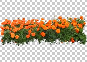 花簇,灌木,草,植物,橙色,目录,数据集群,花,花园里,