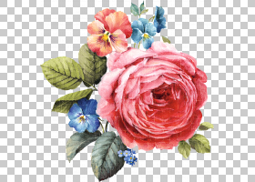 花艺水彩画,牡丹,花卉,罗莎・加里卡,插花,多刺玫瑰,山茶花,杂交