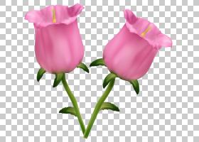 花艺水彩画,芽,花卉,洋红色,植物茎,切花,蔷薇,花瓣,玫瑰秩序,玫