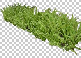 草纹理,灌木,草,植物,草药,花盆,3D计算机图形学,皮肤移植,花,花