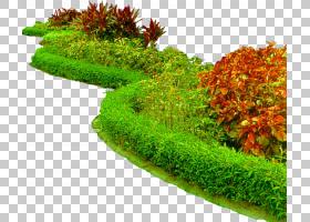 草背景,植被,草,对冲,地被,花盆,植物,灌木,景观美化,风景园林,园
