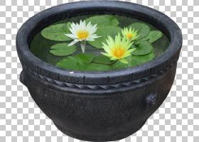 莲花,碗,餐具,陶瓷,莲花,百合,灌木,树,花园,花,侏儒睡莲,睡莲,植