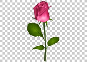 蓝色水彩花,芽,花卉设计,洋红色,植物茎,花瓣,种子植物,蔷薇,花卉