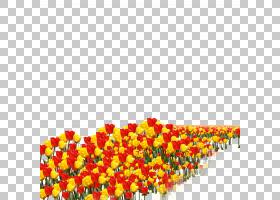 郁金香花,橙色,黄色,资源,花束,花瓣,花,郁金香,