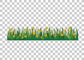 郁金香花,矩形,商品,草甸,植物,草族,草,黄色,植物,园艺,郁金香,