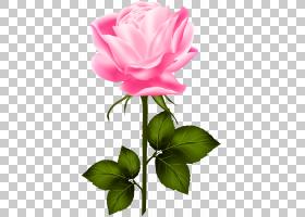 黑白花,floribunda,中国玫瑰,牡丹,切花,蔷薇,玫瑰秩序,花瓣,玫瑰