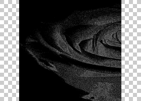 黑白花,切花,静物摄影,玫瑰秩序,玫瑰家族,植物,花瓣,花,绘图,花