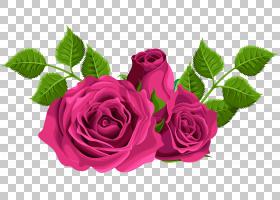 黑粉红玫瑰,红色,花卉,花束,洋红色,蔷薇,切花,插花,花卉设计,花