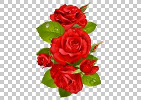黑粉红玫瑰,花卉,插花,切花,floribunda,人造花,花卉设计,蔷薇,玫