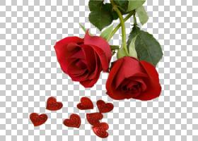 情人节心脏,日本山茶,植物茎,Rosa Wichuraiana,芽,玫瑰秩序,中国