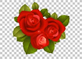 情人节心脏,花卉,插花,切花,蔷薇,花卉设计,情人节,玫瑰秩序,玫瑰