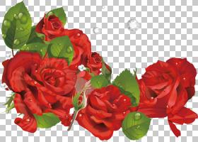 情人节心脏,花卉,花束,插花,切花,floribunda,人造花,花卉设计,玫