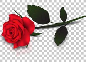 情人节快乐,红色,花卉,插花,花瓣,切花,植物群,植物茎,花卉设计,