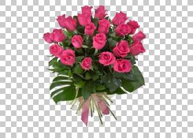 情人节背景,粉红色家庭,洋红色,插花,切花,floribunda,一年生植物