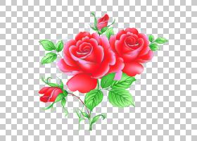 情人节背景,花卉,花束,插花,floribunda,蔷薇,情人节,玫瑰秩序,玫