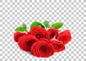 情人节背景,花卉,花束,插花,切花,人造花,花卉设计,蔷薇,玫瑰秩序