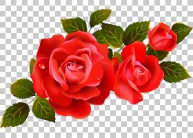情人节背景,花卉,花束,插花,花瓣,floribunda,切花,蔷薇,花卉设计