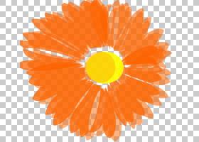 花圈,圆,黄色,金盏花,雏菊家庭,花瓣,博客,花,橙色,
