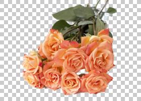 粉红色花卉背景,花卉,橙色,切花,floribunda,插花,蔷薇,玫瑰秩序,