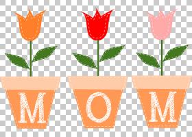 橙花,线路,橙色,花盆,叶,花,植物,演示文稿,网站,礼物,花束,博客,图片